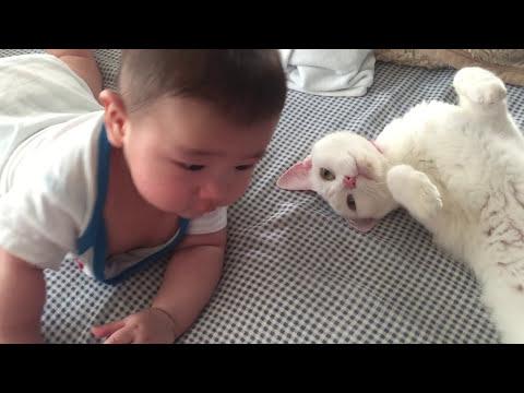 猫に赤ちゃんがゴツン。その時の猫の行動は・・・?
