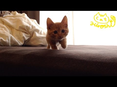 Thumbnail for Cat Video Tabby Kitten Hiding in Bed
