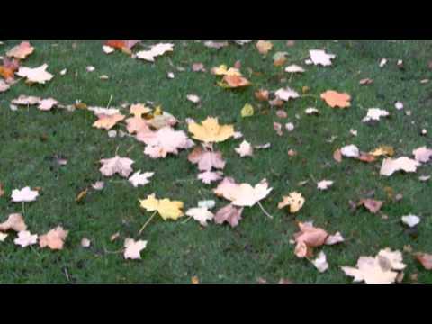 Wednesbury's Brunswick Park Autumnal Scenes 2011