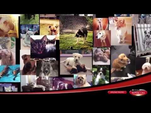 Celebrating Happy & Healthy Pets - Purina Supercoat