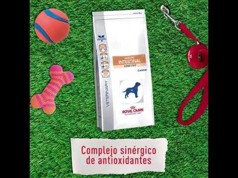 gastro-intestinal-de-royal-canin