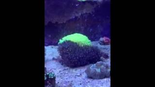 Морской аквариум(, 2013-04-06T19:41:34.000Z)