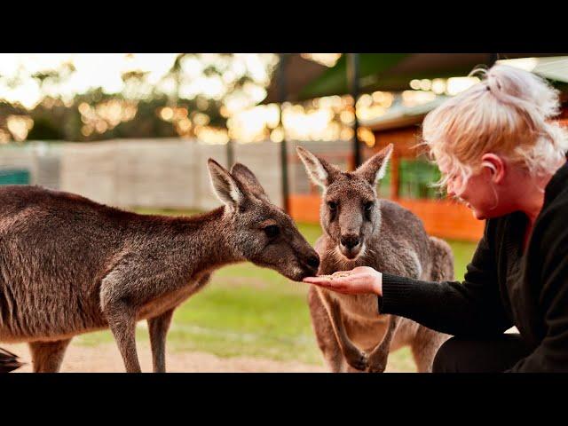 Moonlit Sanctuary Wildlife Park - 2019 RACV Victorian Tourism Awards Entrant