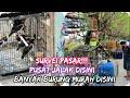 Pusat Jalak Murah Di Klaten Pasar Burung Cawas Cek Harga Burung Terbaru   Mp3 - Mp4 Download