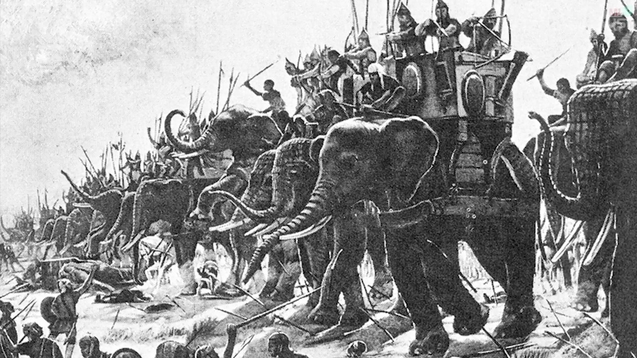 Walrus bones provide clues to fate of lost Viking colony