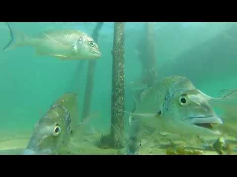 Bream Fishing Forster Tuncurry