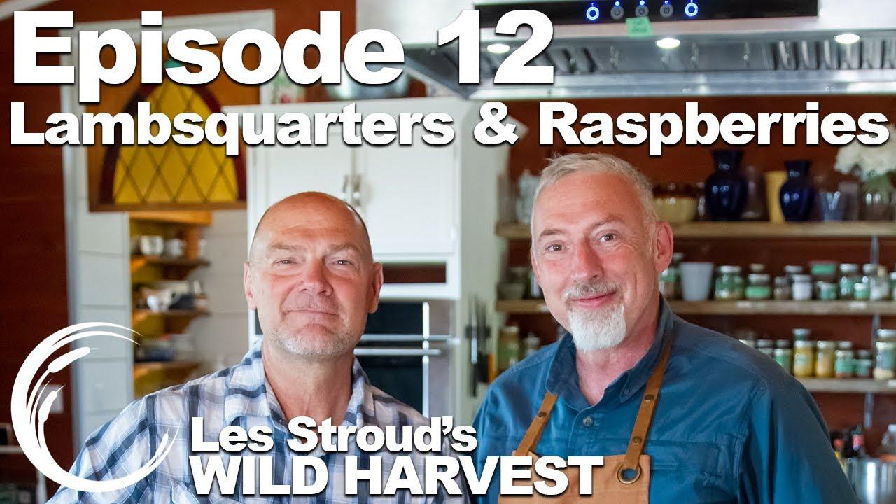 Download Survivorman   Wild Harvest   Season 1   Episode 12   Lambsquarters & Raspberries   Les Stroud
