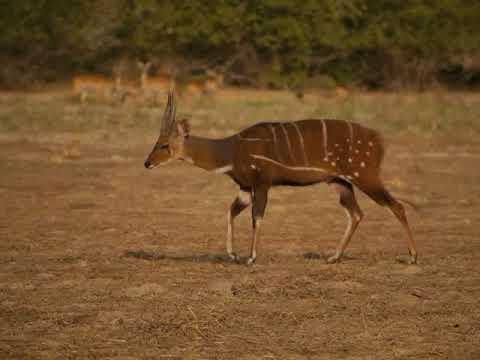 Muni Pomadze Ramsar Site Documentary Final