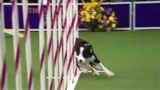 Faster Dog super! самая быстра собака в мире