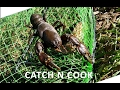 MONSTER Freshwater YABBIES How To Catch And Cook vic high country