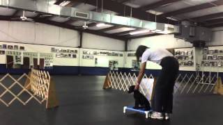 Nathan Does A Triple: Dixie Cup Game - Retrieving And Obedience Dog Training Exercise