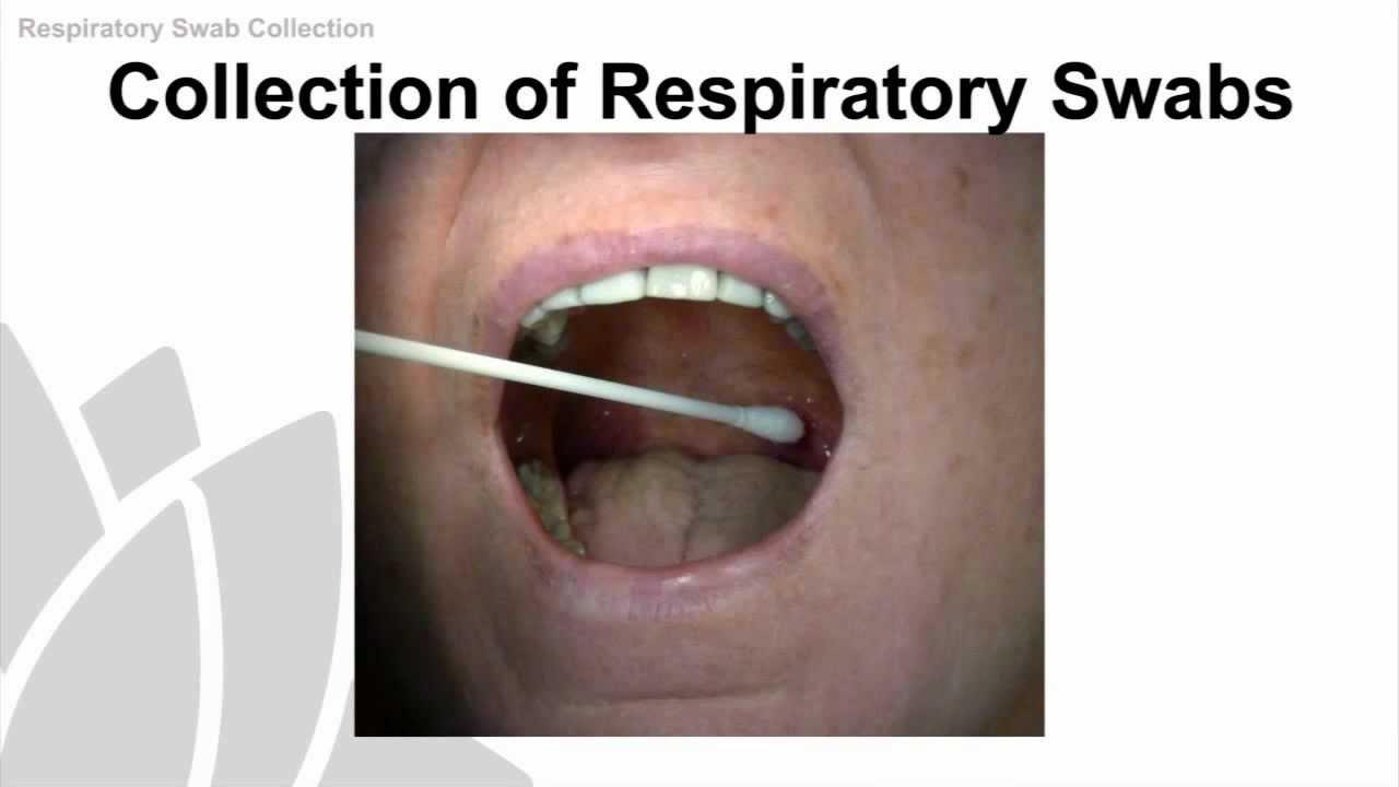 Swab Collection Procedure Respiratory Swab Collection