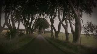 Dark Hedges in Nordirland