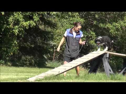 Kiri (Tibetan Terrier) Boot Camp Dog Training Video