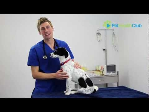 The PetHealthClub - How To Put Eye Drops Or Medication In Your Dog's Eyes