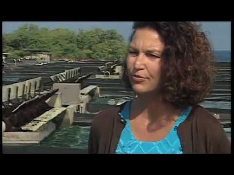 Hawaiian Spirulina Cultivation - Cyanotech's National Media Report | Nutrex Hawaii