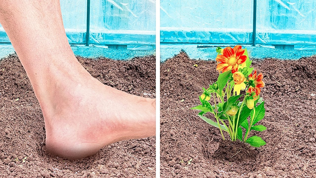 Download 30+ EASY Planting hacks to make your garden blossom || grow seeds, harvesting, backyard crafts