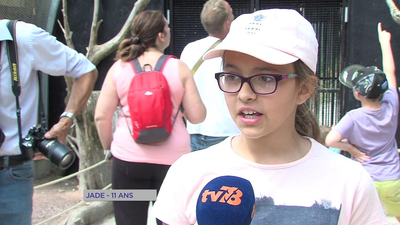 Thoiry : Les nouveautés du parc zoologique à découvrir cet été