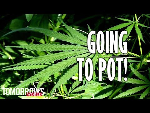 Going to Pot!
