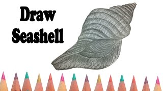 How to draw a Seashell - Drawing Sea animal for kids - YouTube Videos