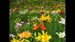 「ココロに花を」より6/8拍子の曲。 エレカシお得意の短調から長調に変...