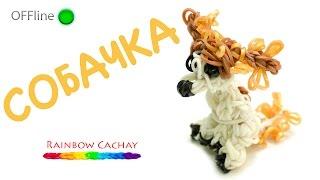 Собака Моль. Плетение из резинок. Loom bands. Rainbow cachay.