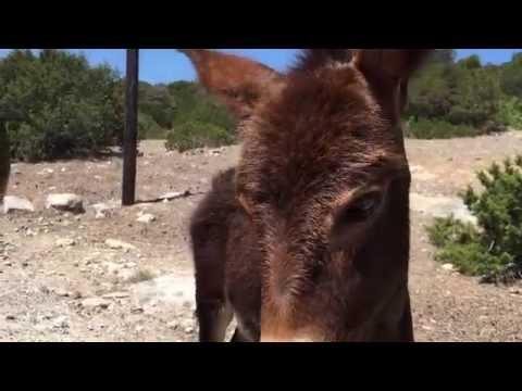 Wild donkeys in Karpaz, North Cyprus