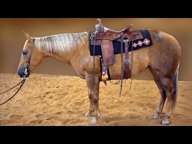 Russ Krachun Kozak Horsemanship - Versatility Horses - Stylish Chexy Gem aka