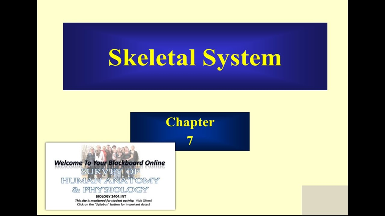 CHAPTER 7: THE SKELETAL SYSTEM, PART A - YouTube