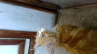 Мой кот кричит на муху