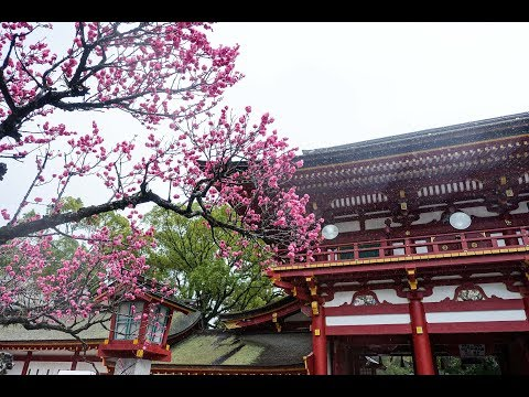 【Film  of Japan01】福岡-FUKUOKA-