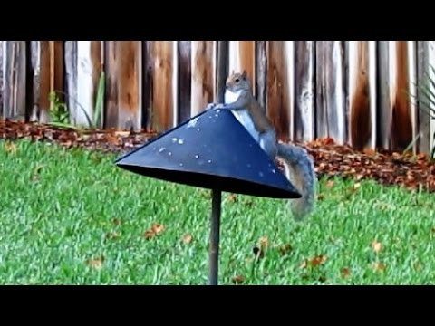 Squirrel Baffle Long Term Test And Review Youtube