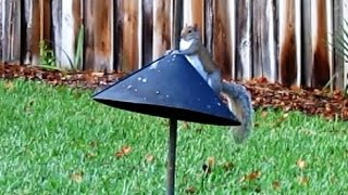 Squirrel Baffle Long Term Test And Review