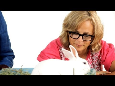 Should You Spay / Neuter Your Rabbit? | Pet Rabbits