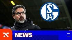 Vertrag bis 2022: David Wagner wird neuer Schalke-Trainer  | Ex-Borusse beim FC Schalke 04