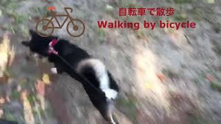 黒柴Copan 自転車でお散歩に行くとたくさん走れます♫ でも影が気になっ...