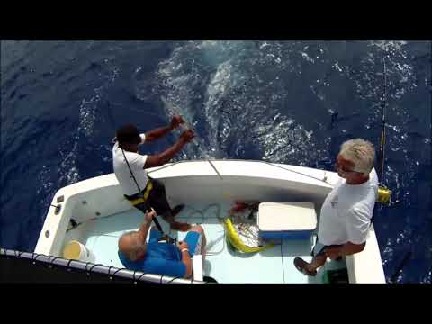 Gone Fishing Punta Cana   Deep Sea Fishing Charters, Dominican Republic