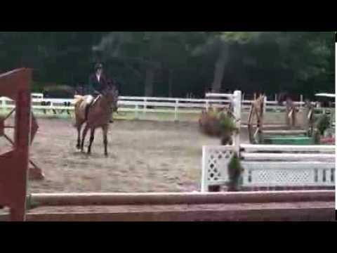 """BRANDO 3'0"""" Pre-Green Hunters at Saratoga Classic Horse Show"""