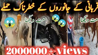 Animal attack 2020 // 2020 funny videos // cow qurbani 2020 // eid 2020