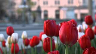 Canon 50D Video Test Footage 1080p30(Made possible by Magic Lantern Firmware., 2013-05-16T00:44:30.000Z)