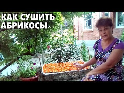 Вопрос: Как хранить недоспевшие абрикосы, чтобы они не испортились и доспели?