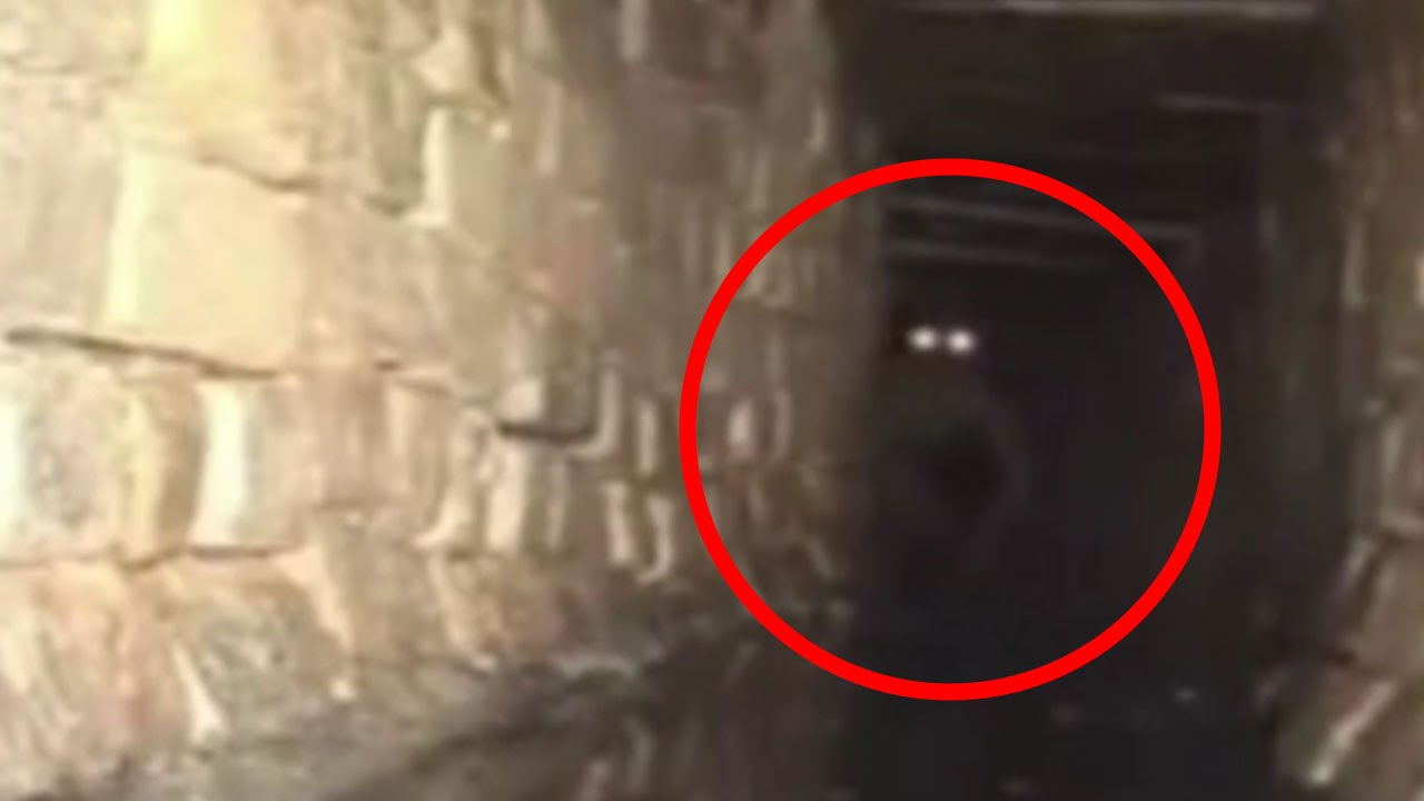 Image result for unexplained creatures caught on tape