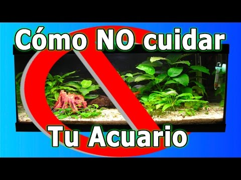 C mo no cuidar tu acuario de peces tropicales youtube for Lista de peces tropicales para acuarios
