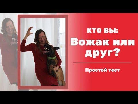 Кто вы для свой собаки: друг или вожак? Доверяет ли пес вам? вы -Вожак или лидер?