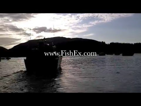Copper River Salmon season - Cordova Alaska