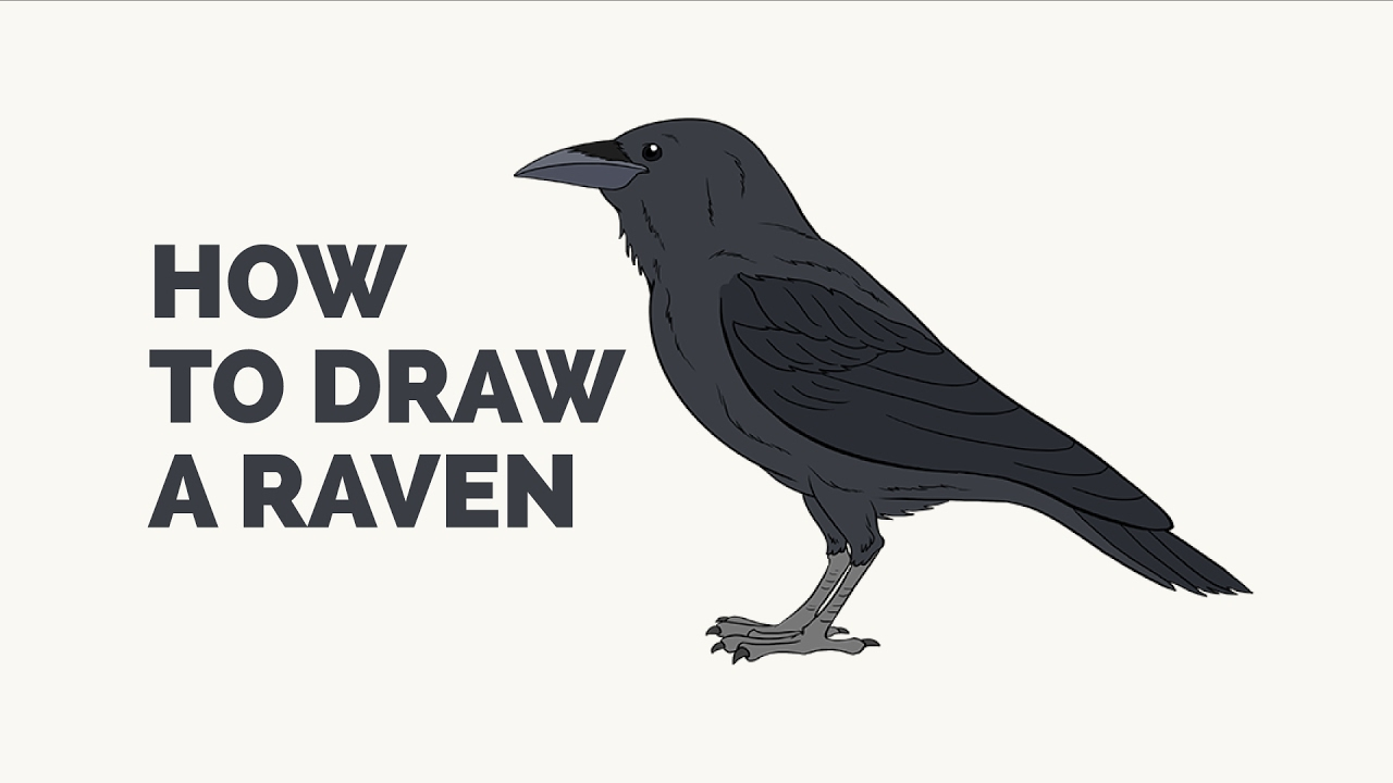 how to draw a raven easy step by step drawing tutorial