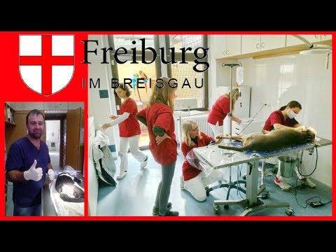 Германия. Рабочие будни ветеринарной клиники. + Лайфхак ...