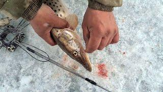 ЛЕОПАРДОВЫЕ ЩУКИ АМУРСКИХ ПРОТОК Весенняя рыбалка на щуку 2021
