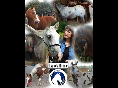 Idaho's Miracle - A Tribute to the Horse Who Inspired Stolen Horse International