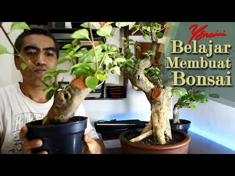 How to Make a Bougainvillea Bonsai from Large Cutting